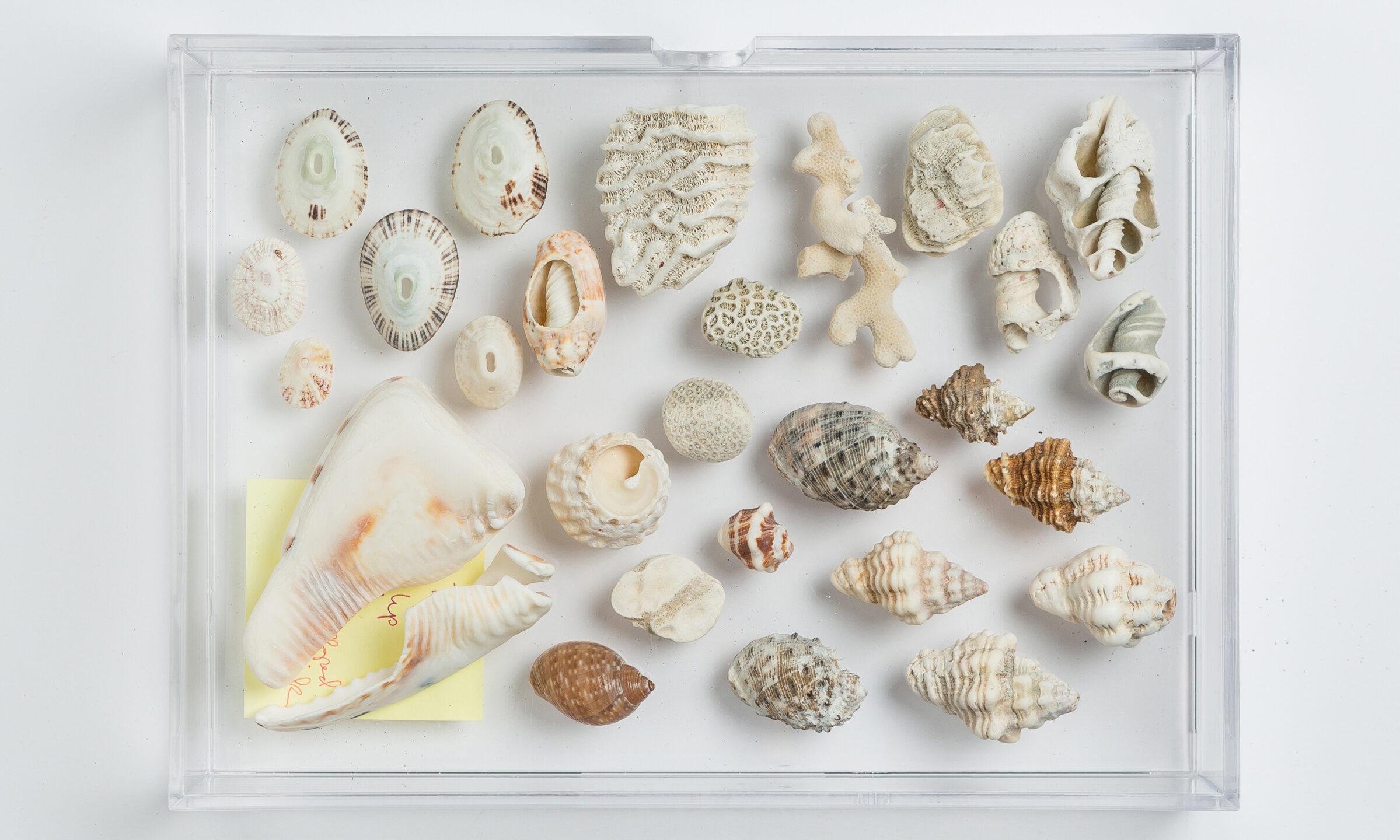 mish_products_earrings_Cabana-Nautilus-ER-Editorial-2_resize